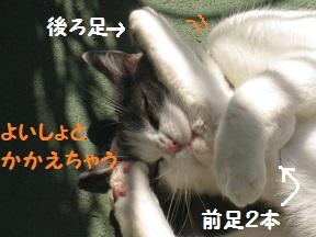 あしあげる (3).jpg
