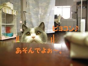 あそんでこうげき (4).JPG