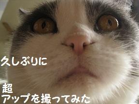 あっぷぅ (5).jpg