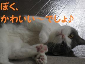 いそがしのよ (1).jpg