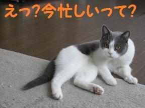 いそがしのよ (2).jpg