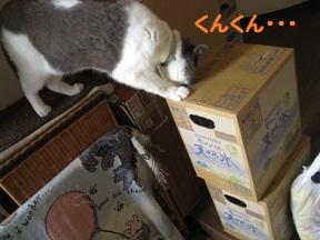 いらっしゃ~ (1).jpg