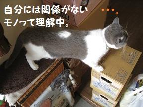 いらっしゃ~ (3).jpg