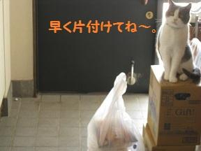 いらっしゃ~ (4).jpg