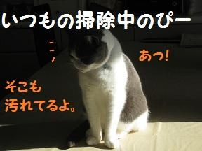 おおそうじでGO(1).jpg