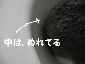 かくれんぼ (1).jpg