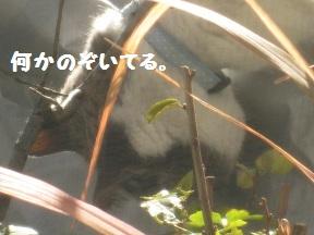 かばああったか (3).jpg