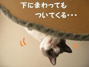 かめらめせんde go (2).jpg
