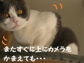 かめらめせんde go (3).jpg