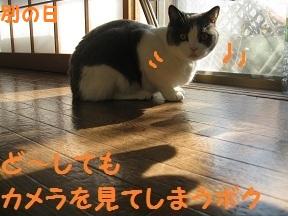 かめらめせんde go (4).jpg