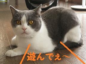 かわいい~のね (1).jpg