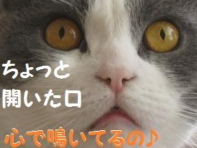 かわいい~のね (2).jpg