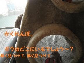 きゃっとたわーのした (4).jpg