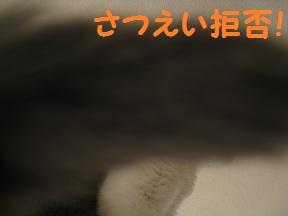 きょひ? (3).jpg