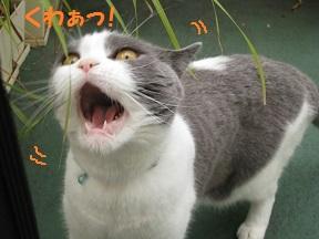 くわぁ (4).jpg