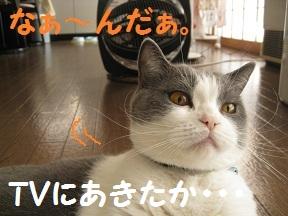 くんくんだってば (2).jpg