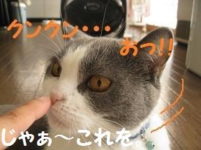 くんくんだってば (4).jpg