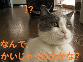 くんくんだってば (5).jpg