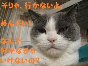 ここにきなさい (4).JPG