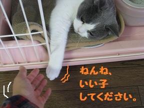 こっちきてね (3).jpg