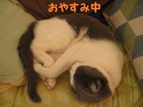 ごろころ (1).jpg