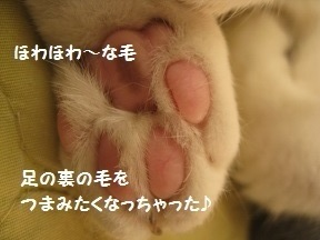 ごろころ (3).jpg