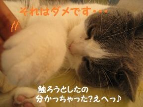 ごろころ (4).jpg