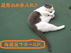 ごろご~ (2).jpg