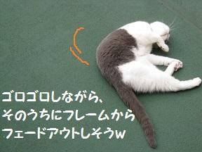 ごろご~ (6).jpg