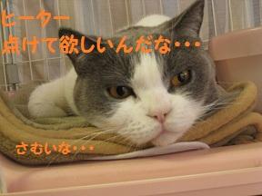 さむいんだなぁ1 (4).jpg