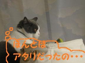 ざんねん、ねん (4).jpg