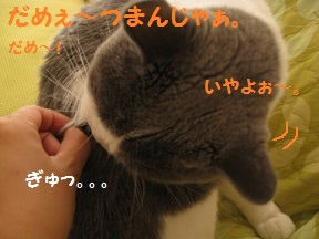つまみな (3).jpg
