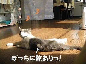 つまむ (2).jpg