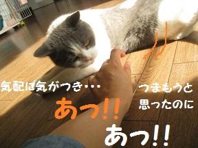 つまむ (3).jpg