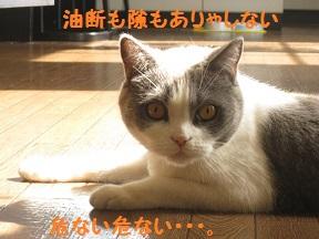 つまむ (4).jpg