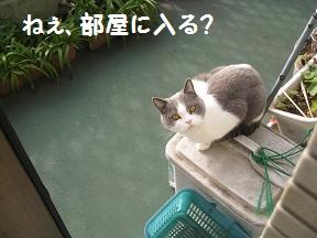 どうしよ、か (1).jpg