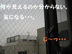 なにがぁ (4).jpg
