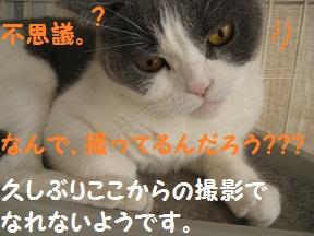 なんで? (3).jpg