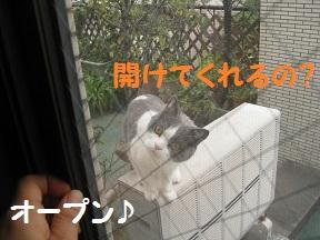 ねこだの (2).jpg