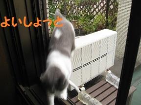 ねこだの (4).jpg