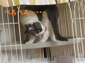 ねましょ (2).jpg