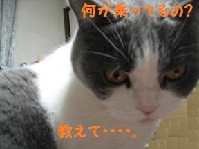 のせてみた (4).jpg
