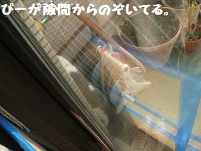のぞきみ (1).jpg