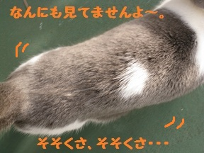 のぞきみ (3).jpg
