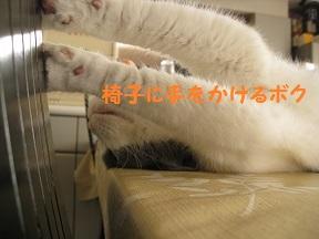 のびねこ (2).jpg
