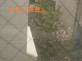 ひとりはなみ (4).jpg