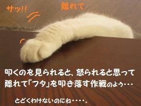ふたがほしい1 (2).jpg