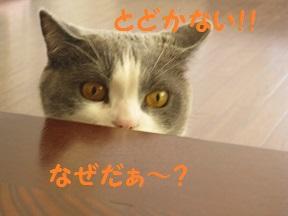 ふたがほしい1 (3).jpg