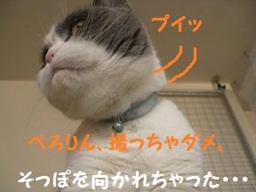 ぷいっつ (4).jpg
