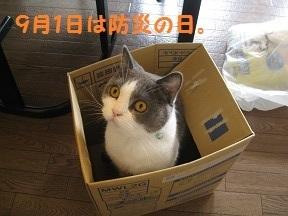 ぼうにゃん (3).jpg